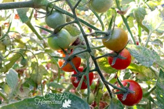 How to turn your garden dreams into reality and grow healthy, organic food for your family!