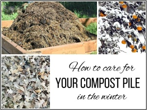 How to care for your compost pile over the winter.